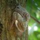sante foret chauve souris