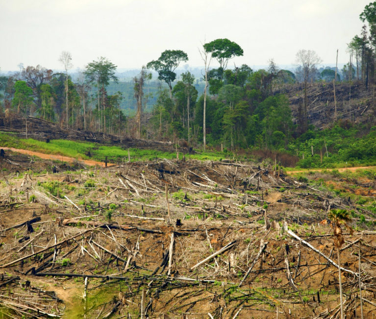 deforestation indonesie