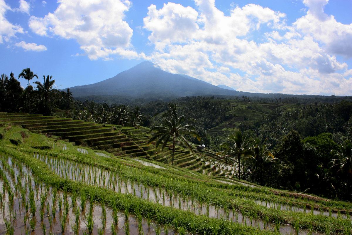 riziere deforestation