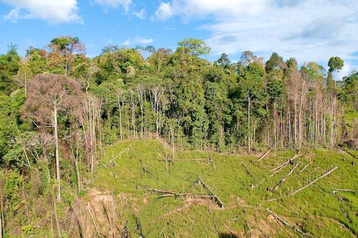 deforestation indonesie