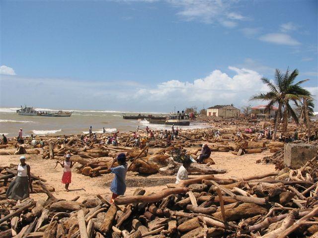 Madagascar bois cyclone