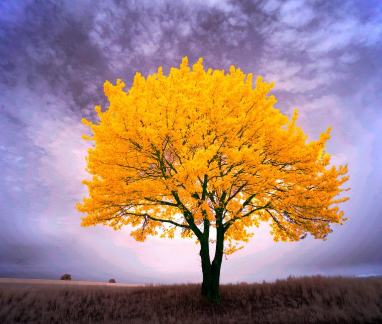 arbre richesse