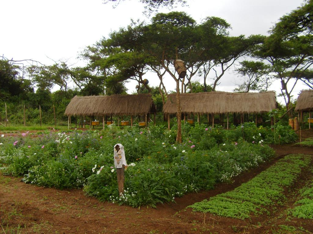 agroforesterie ethiopie afrique