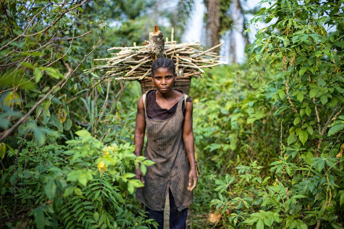 bois energie afrique