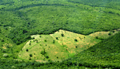 deforestation bresil