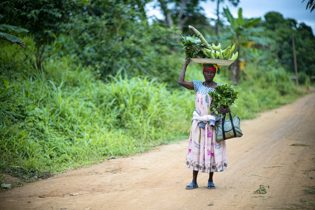 agroforesterie afrique