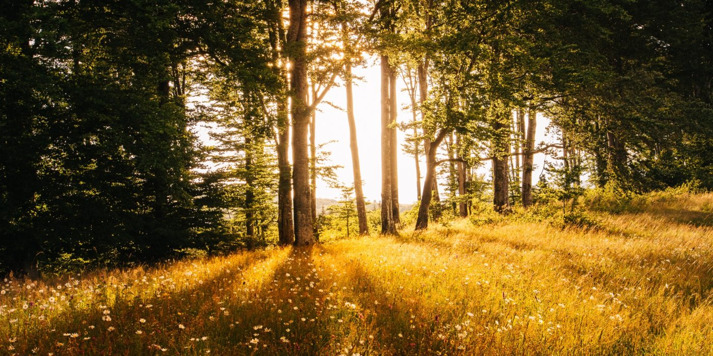 benefices arbres