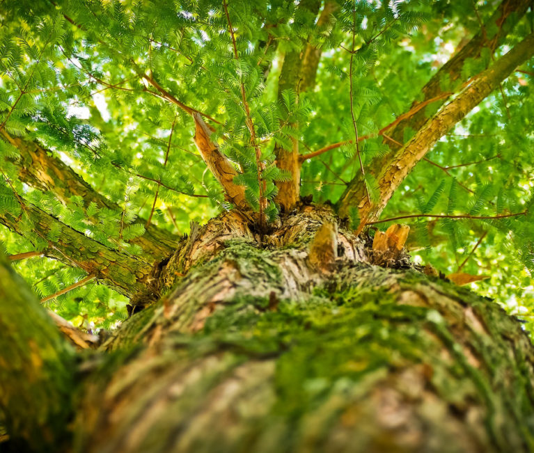 Les arbres : leur importance au quotidien