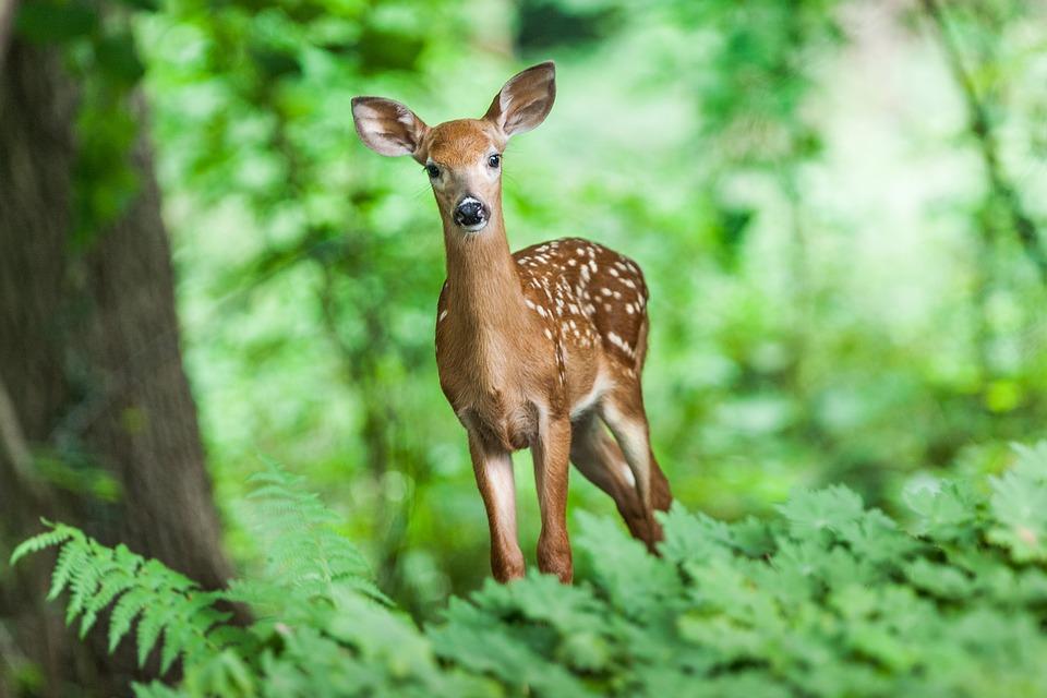 biodiversite foret