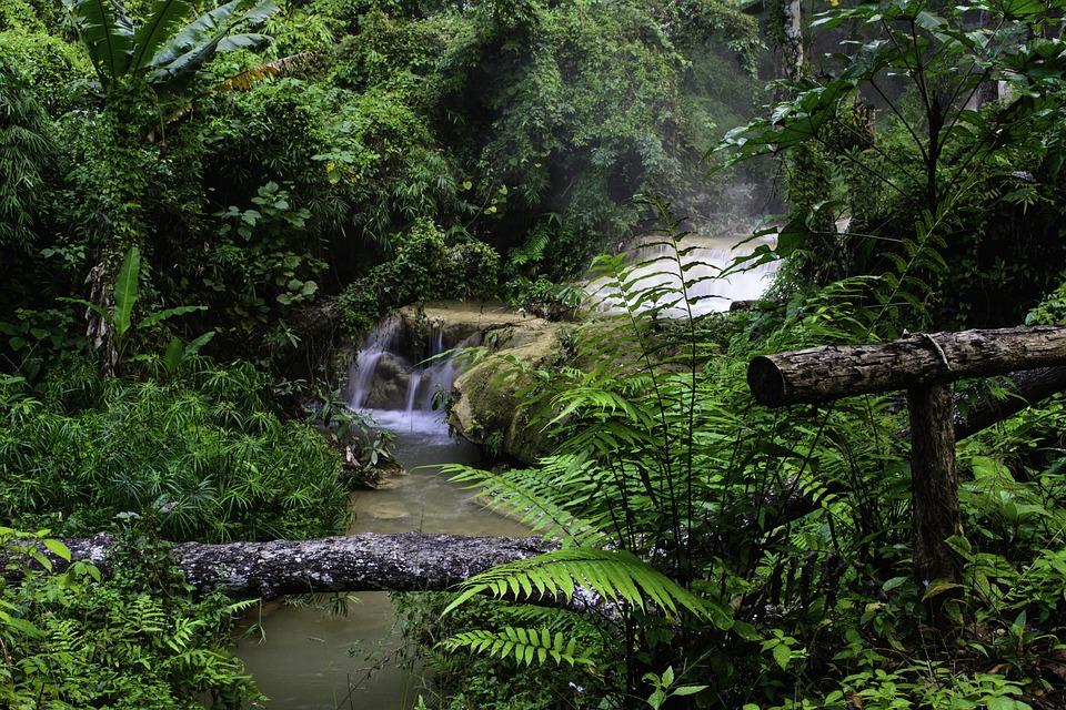 préservation forêt