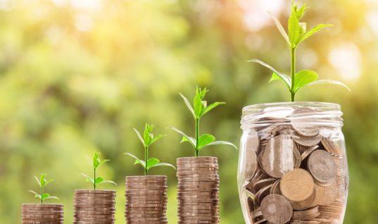Planter des arbres, un enjeu économique