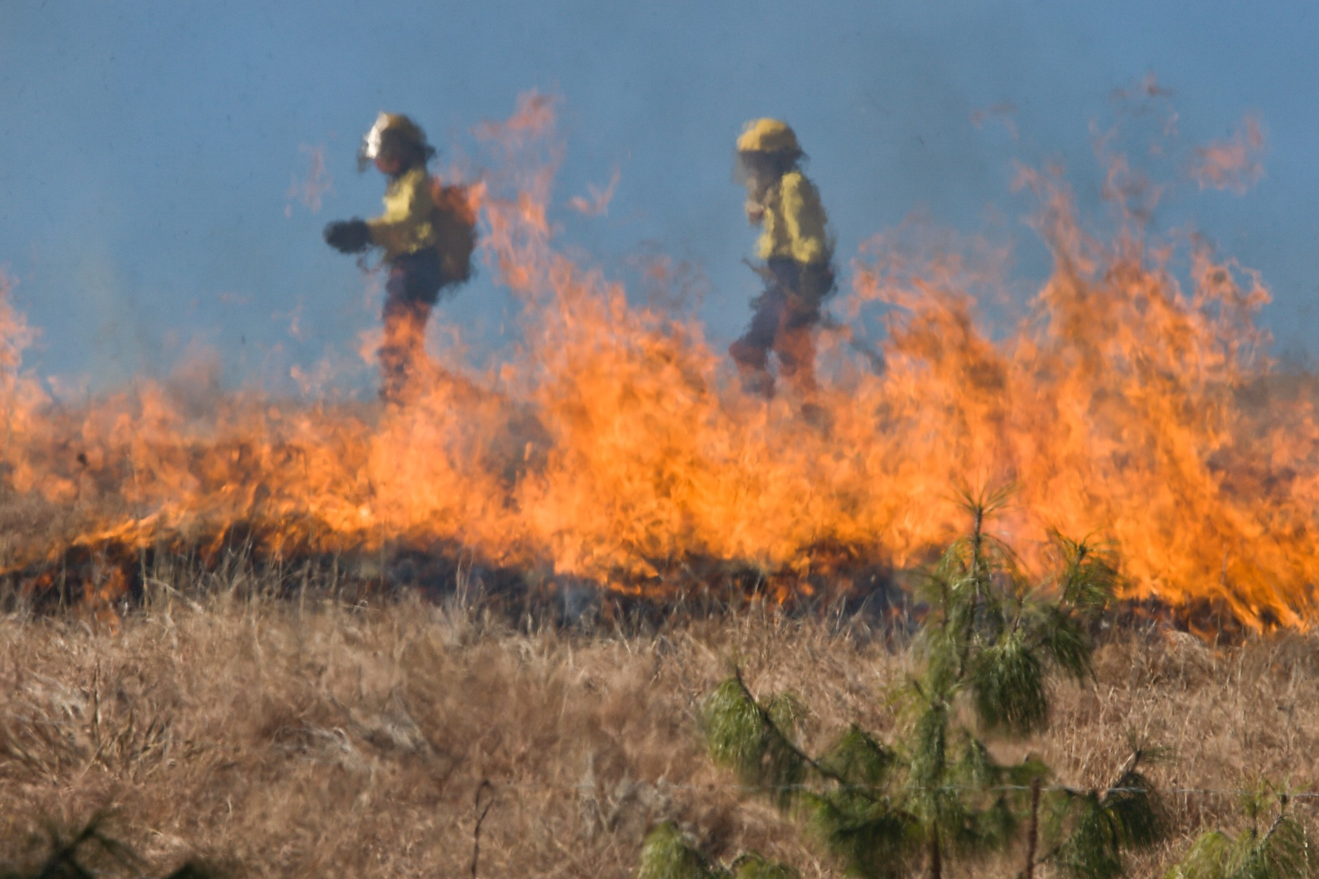 incendie foret portugal
