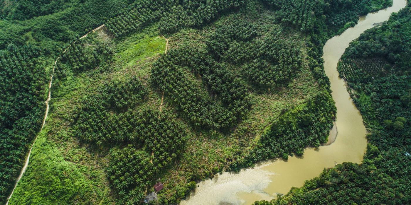deforestation huile palme sumatra