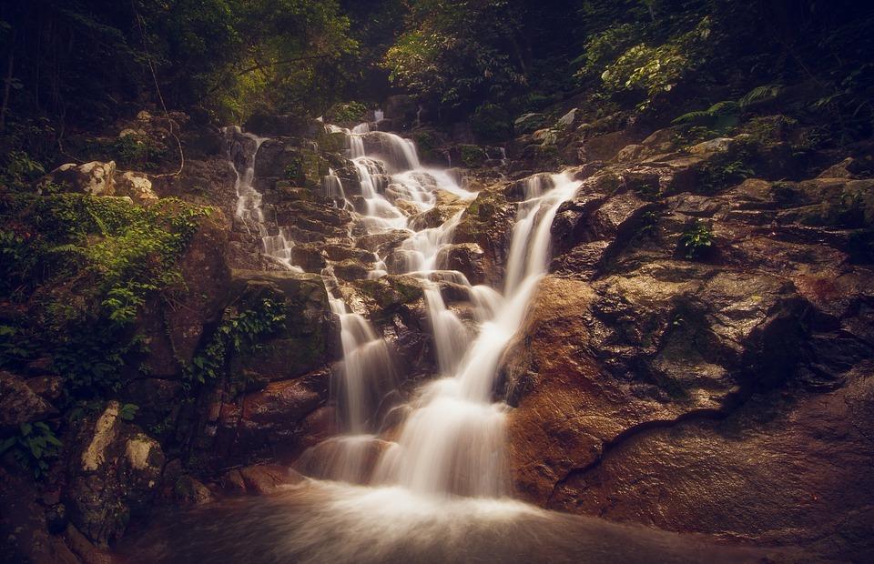 forêt eau