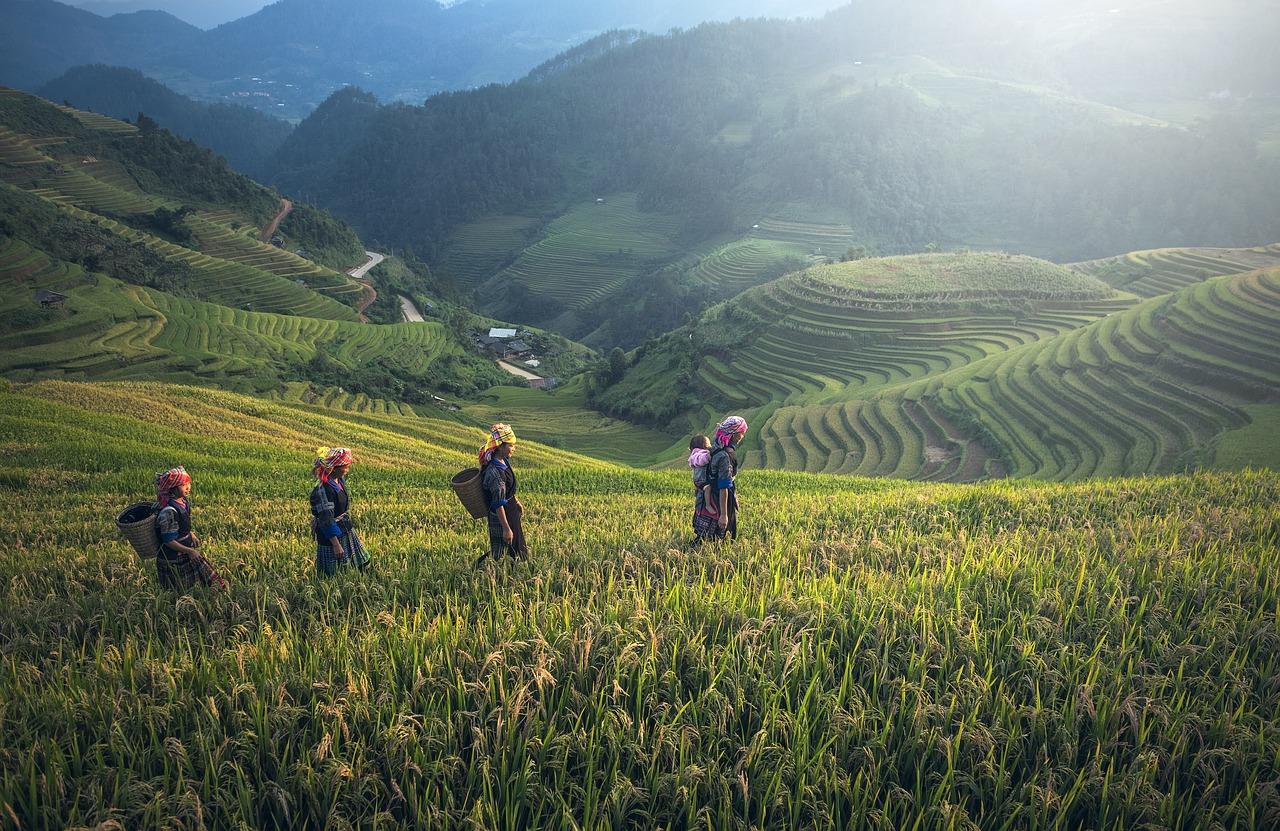 thailande agriculture