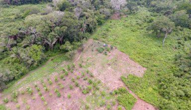 projet reforestation