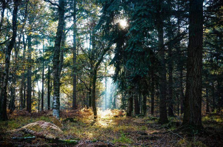 forêt arbres