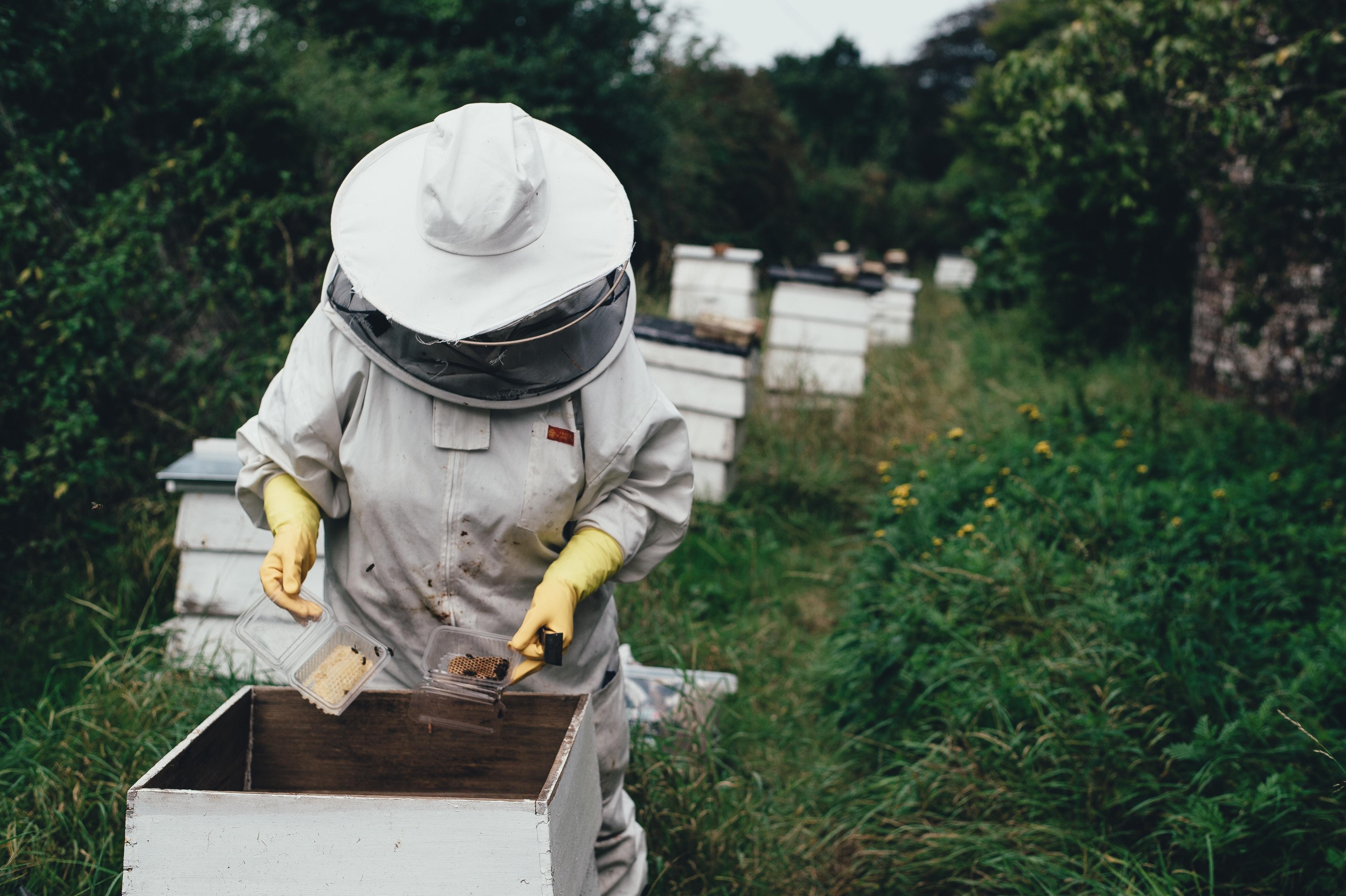 abeilles biodiversite