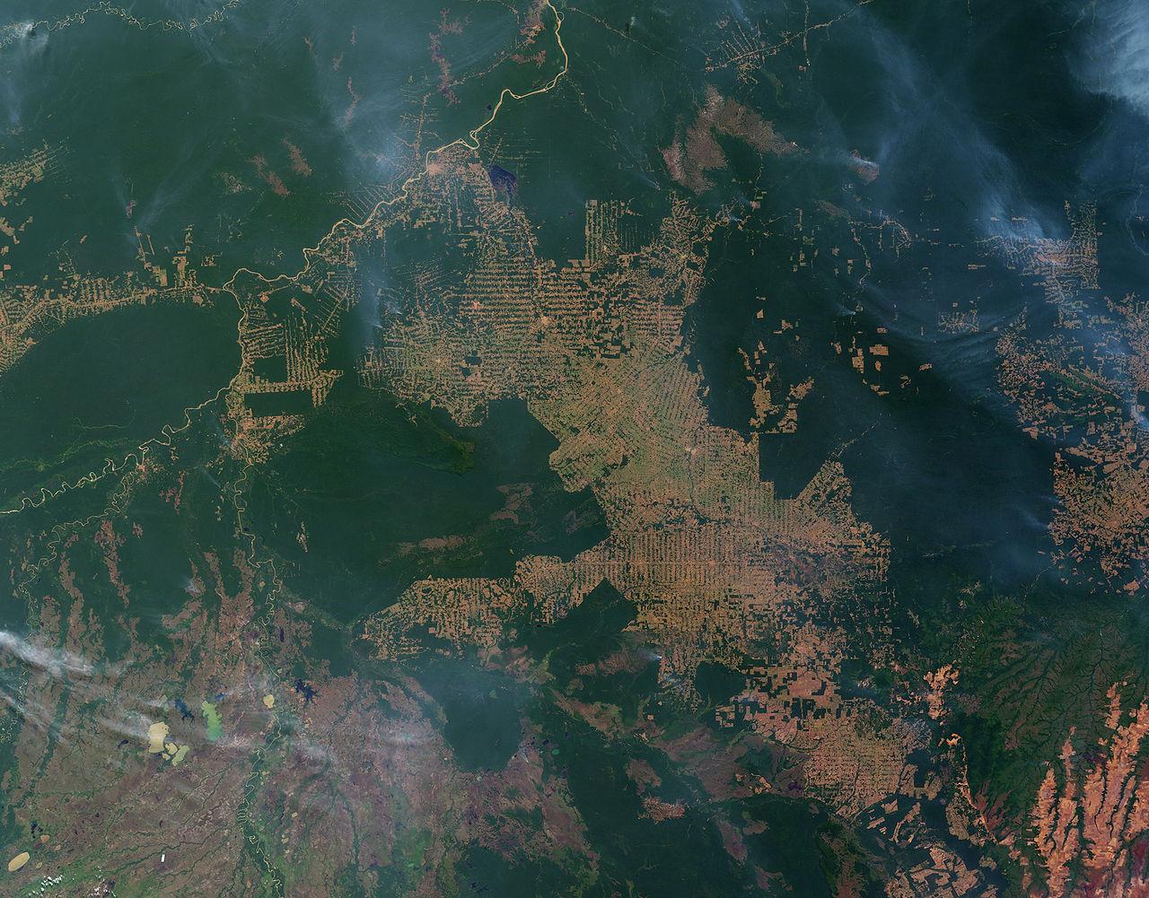 image satellite deforestation brésilienne