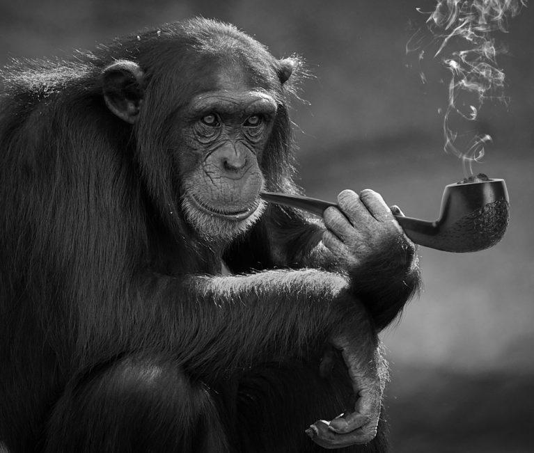 cigarette deforestation