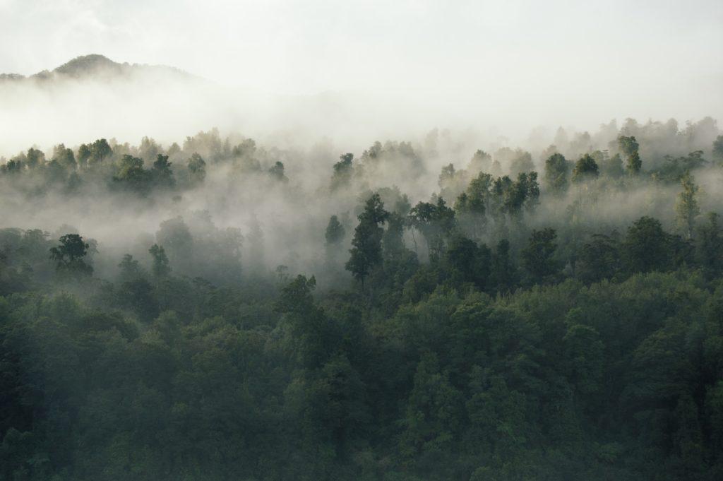 foret climat