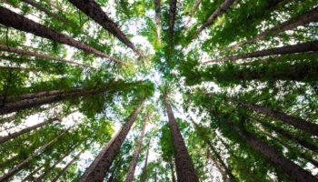 planter arbre climat