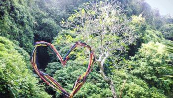 geste quotidien deforestation