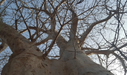 Lutter contre la déforestation au Sénégal