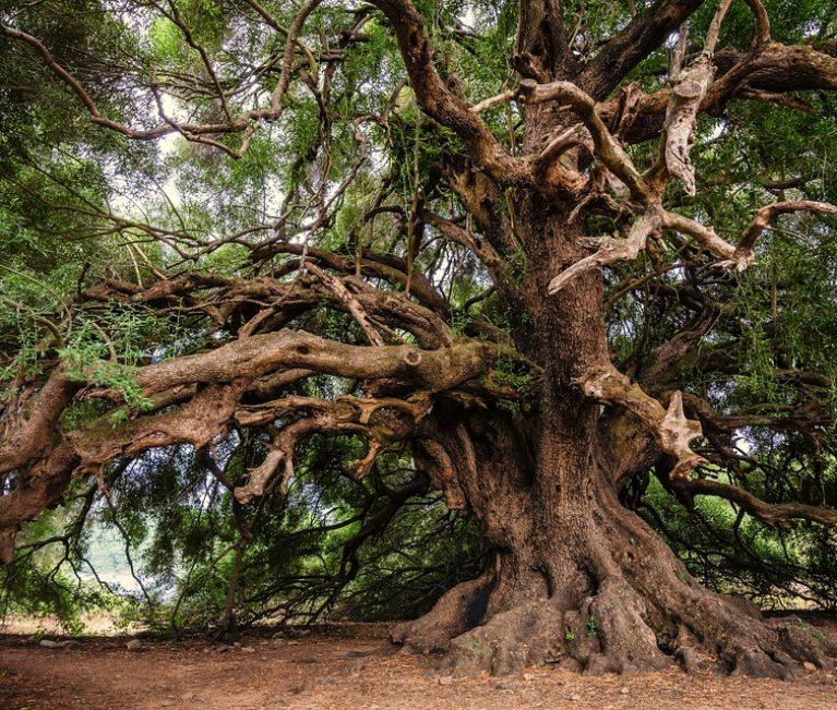 Les arbres : ces témoins du temps éternel