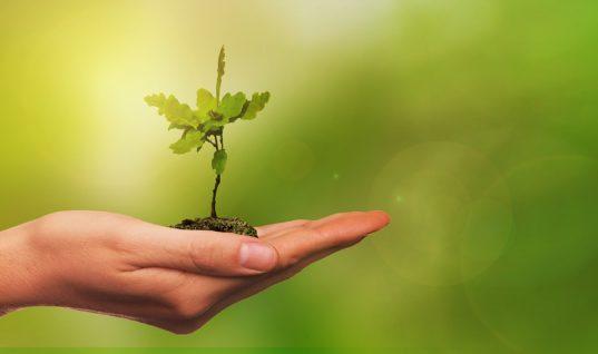 planter arbres changements climatiques