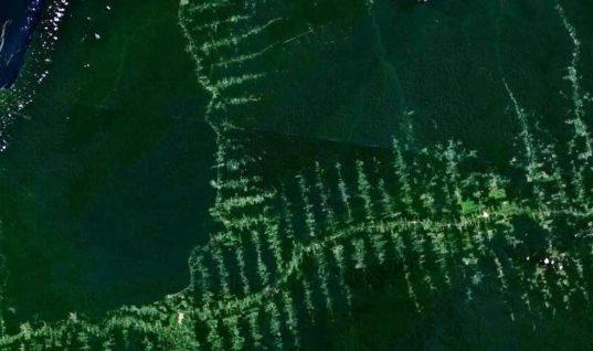 deforestation transamazonienne
