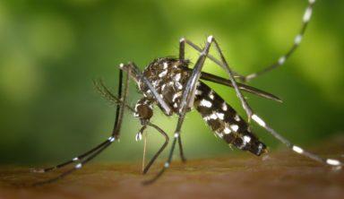 deforestation paludisme moustique